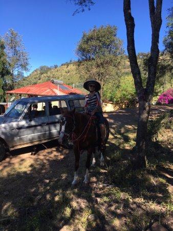 Gatton, Australia: Horsing around