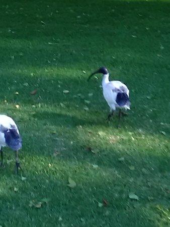Albury Botanic Garden : IMG_20170504_145425_large.jpg