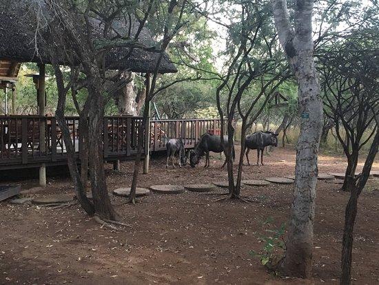 Marloth Park, Güney Afrika: photo0.jpg