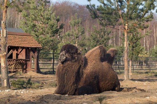 Slupsk, Polen: zoo