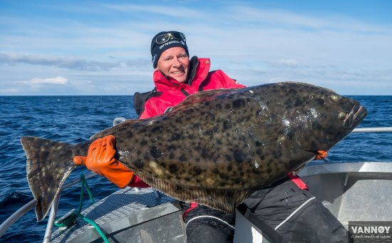 Troms, Norge: Big Haibut catch by our guests