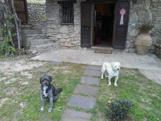 B&B All'Ombra di San Damiano: Lillo e Charlie