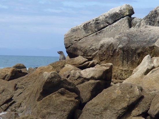 Kaiteriteri, Νέα Ζηλανδία: The locals!