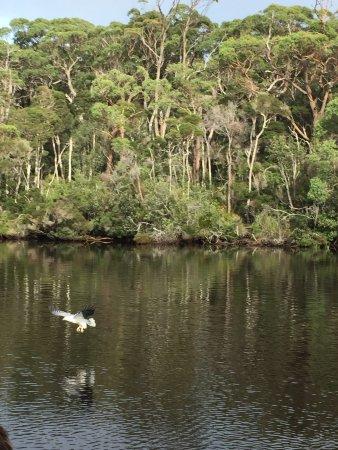 Arthur River, أستراليا: photo6.jpg