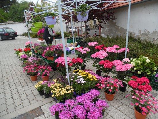 Keszthely Market