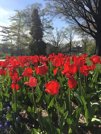 Queens Botanical Garden Flushing Ny Top Tips Before You Go With Photos Tripadvisor