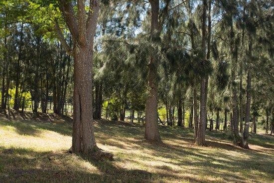 Stanford, Zuid-Afrika: Pine garden