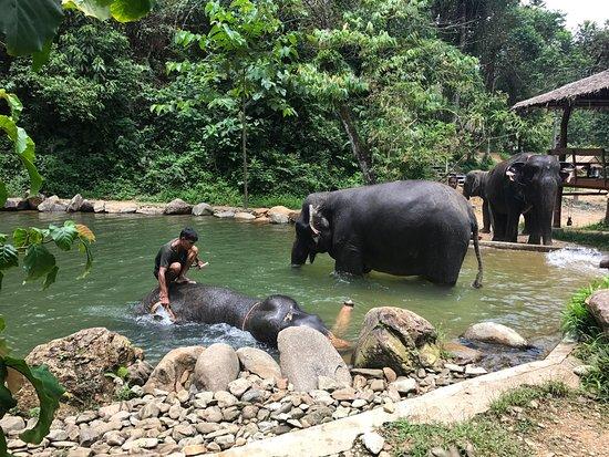 photo3.jpg - Picture of Phang Nga Elephant Park, Phang Nga ...