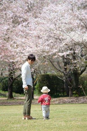 Saito, Japan: 벚꽃과 유채꽃 주변모습