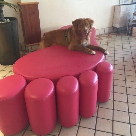Hotel Little: Gli animali sono benvenuti !
