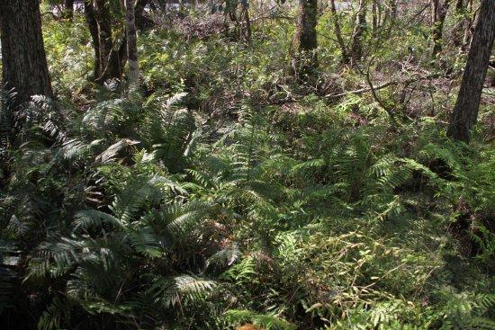 Lake Louisa State Park: Liush Vegetation