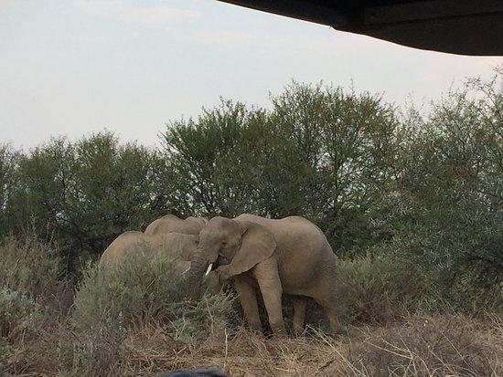 Sanbona Wildlife Reserve - Tilney Manor, Dwyka Tented Lodge, Gondwana Lodge Εικόνα