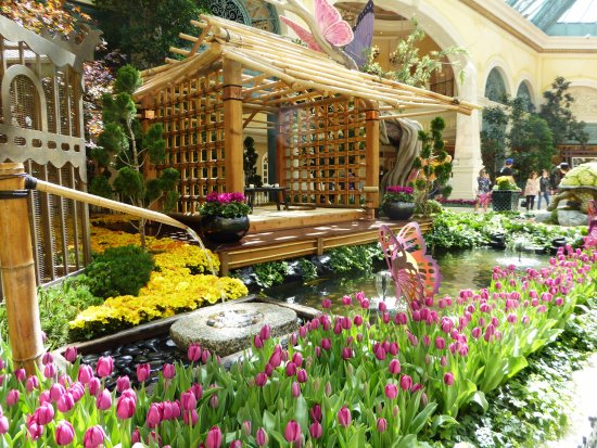 Picture Of Conservatory Botanical Gardens At Bellagio Las Vegas Tripadvisor