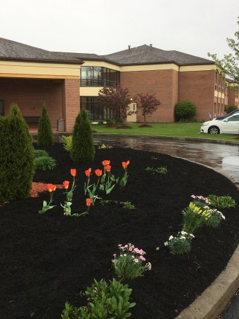 Comfort Suites Buffalo: Beautiful spring flowers !!