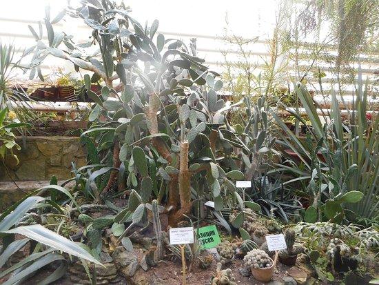 Ufa Botanical Garden照片