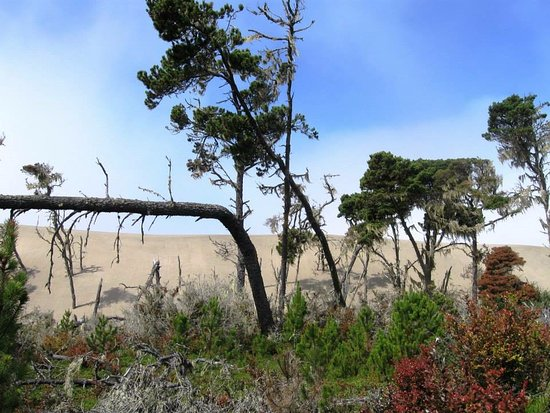 Hotel Arcata : Explore Ma-le'l Dunes west of town.  A dynamic, one-of-a kind ecosystem found nowhere else.