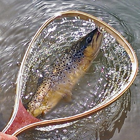 Fishtail Ranch: Beautiful Native Brown Trout
