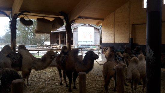Grub am Forst, Allemagne : Im Stall - Bereitmachen für die Karawane