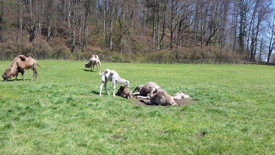 Grub am Forst, Allemagne : Babys draußen