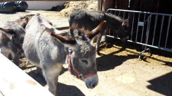 Grub am Forst, Allemagne : Esel