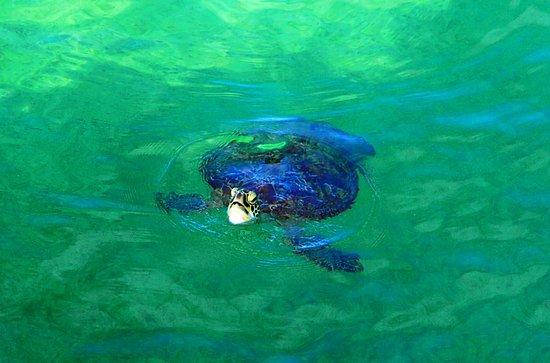 Bilde fra Green Island