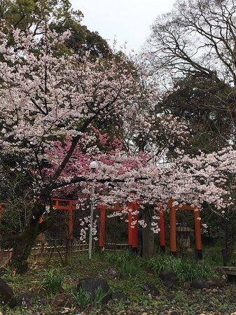 Hirano Shrine: photo2.jpg