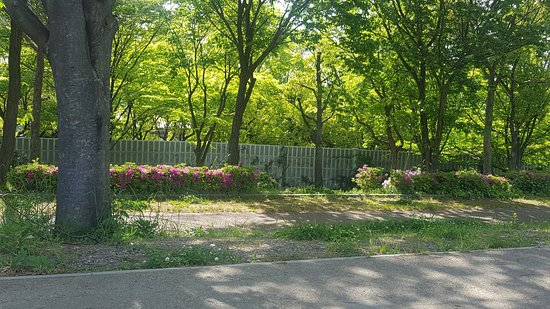 Flower Expo Memorial Park Tsurumi Ryokuchi Photo