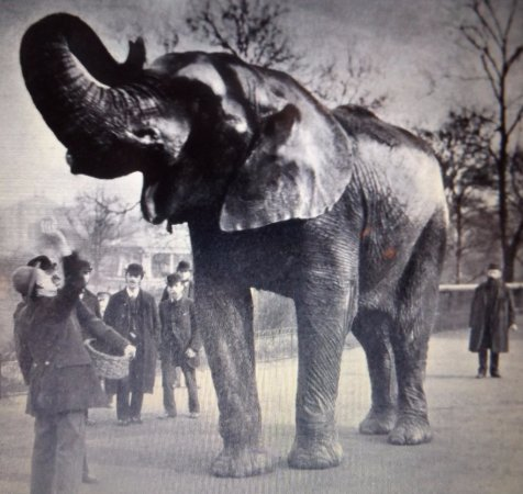 Saint Thomas, Canadá: Old picture of the famous Jumbo