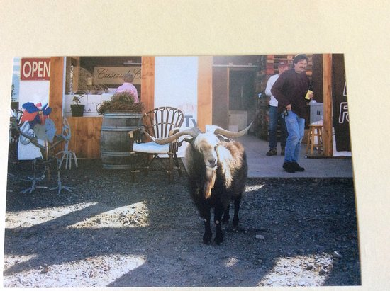 Wishram, WA: This long horned fellow was the inspiration for a wine appropriately named Goat Head Red.