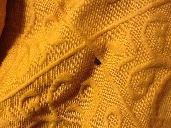 Madison, GA: Cigarette holes in comforter