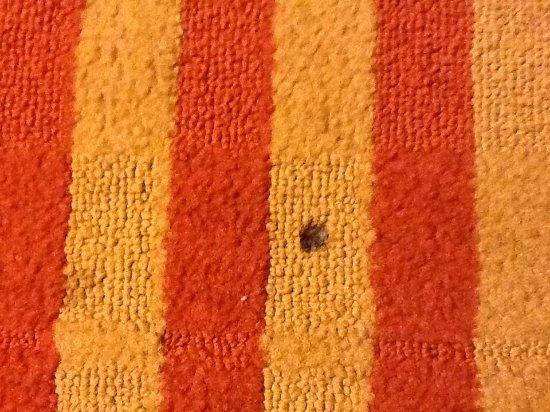 Madison, GA: Cigarette holes in carpet.