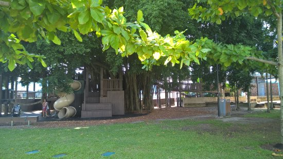 Figtree Playground
