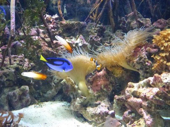 Birch Aquarium at Scripps: Dory and Nemo