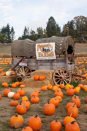 Roloff Farms Pumpkin Season Picture Of Roloff Farms Hillsboro Tripadvisor