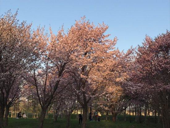 Moerenuma Park: photo0.jpg