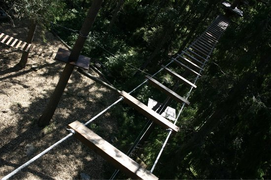 Upsala, Suecia: Skywalking in the treetops at Fjällnora - Uppsala