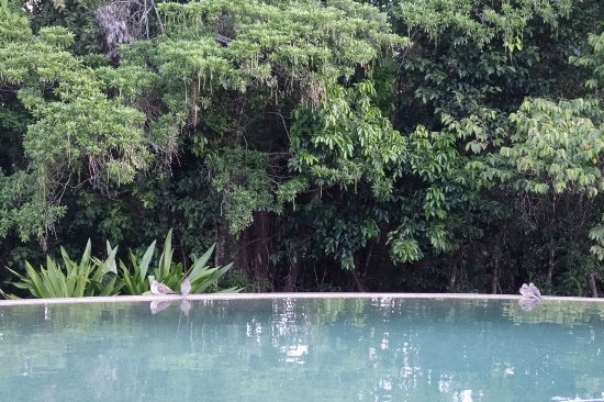 Diwan, Australia: Wet edge Rainforest pool looking towards the Rainforest