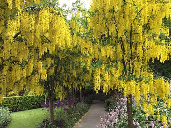 Photo of Botanical Garden VanDusen Botanical Garden at 5251 Oak St., Vancouver V6M 4H1, Canada