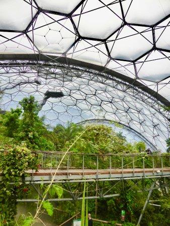 Eden Project Tree Top Walkways