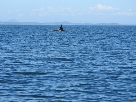 Ocean EcoVentures Whale Watching: Thrilling adventure