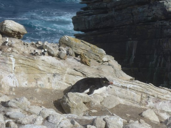 Западный Фолкленд, Фолклендские острова: Relaxen in der Sonne...