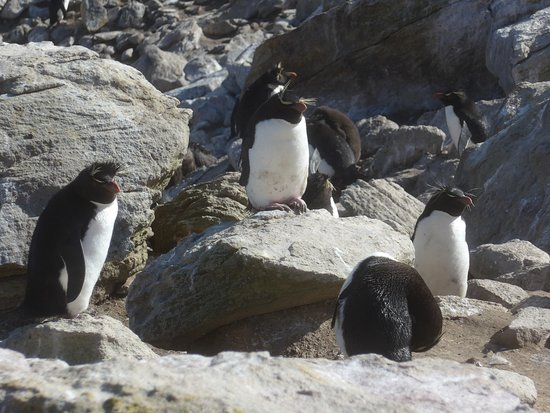 Западный Фолкленд, Фолклендские острова: sie genießen die Sonne