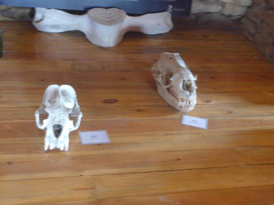 Западный Фолкленд, Фолклендские острова: im Museum