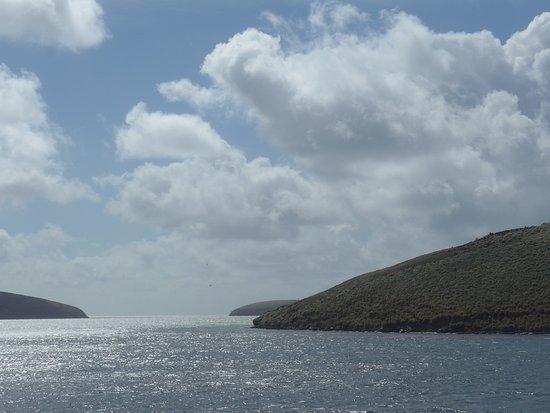 Западный Фолкленд, Фолклендские острова: New Island