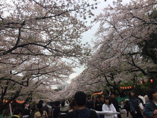 photo2.jpg - Picture of Ueno Park, Taito - TripAdvisor