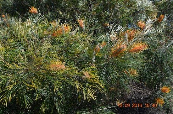 South Perth, Australië: Wild flowers?