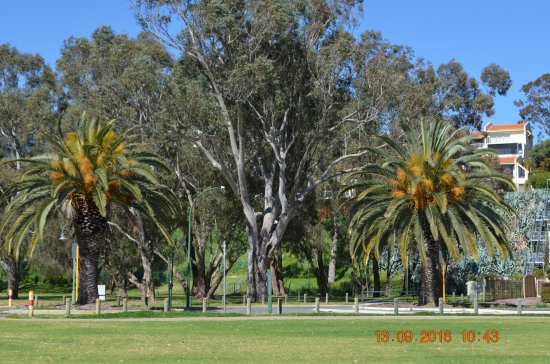 South Perth, Australia: Trees at the park