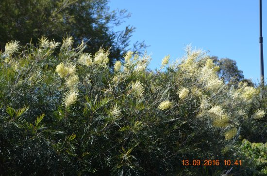 South Perth, Australien: More flowers