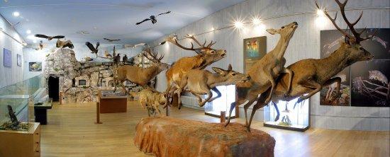 Museo de la Naturaleza Valle del Alberche