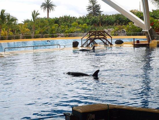 Piscina Orcas Bild Fr N Loro Parque Puerto De La Cruz